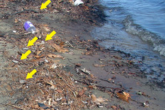 soil, pollution,