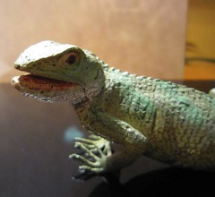 agama, animal, reptile, lizard, fauna, african chameleon, scaled reptile, chameleon,