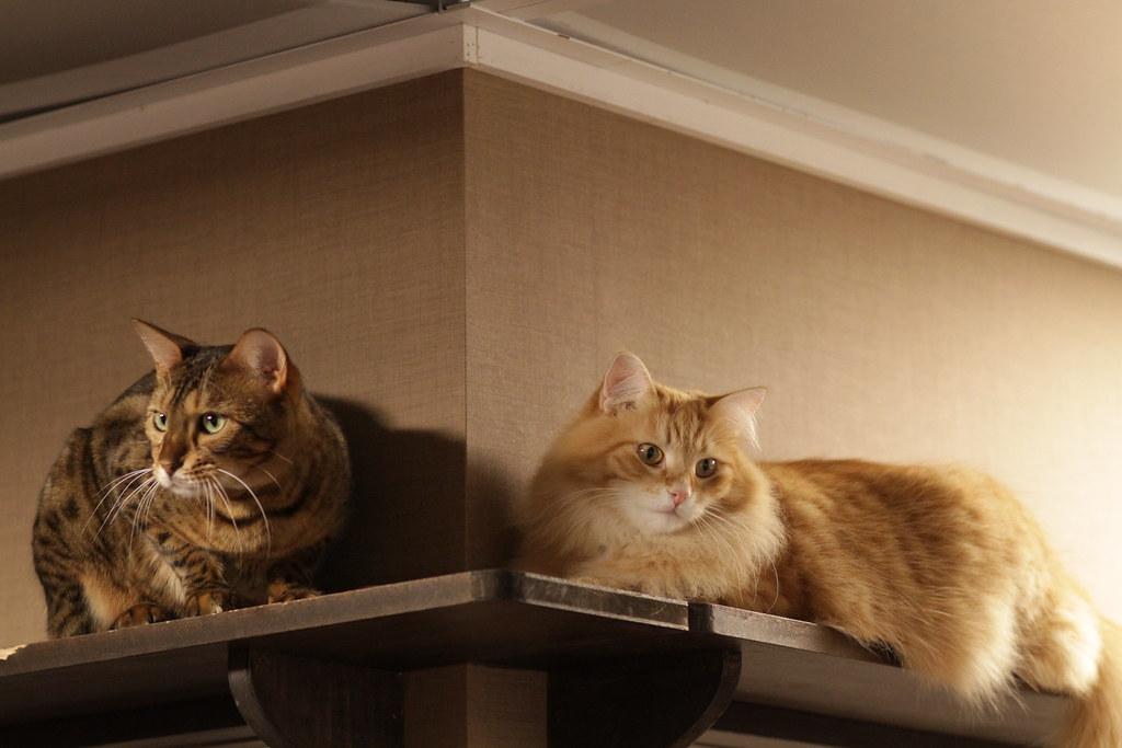 Cat CCTV