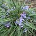 First flowers in Blackheat found