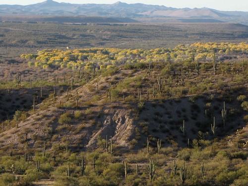 arizona usa landscapes flickr desert unitedstatesofamerica gps 2010 panoramio