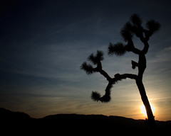Joshua Tree national park-2.jpg