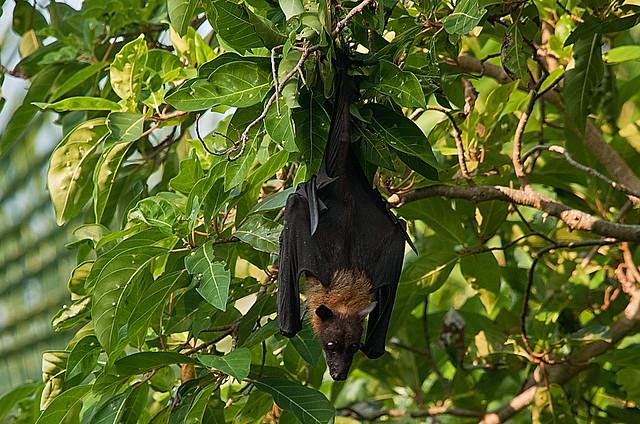 fruit ninja 2 giant fruit bat