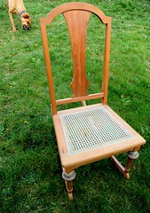 Rosie chewing a stick, 3/4's size antique wood rocking chair, Seattle, Washington, USA