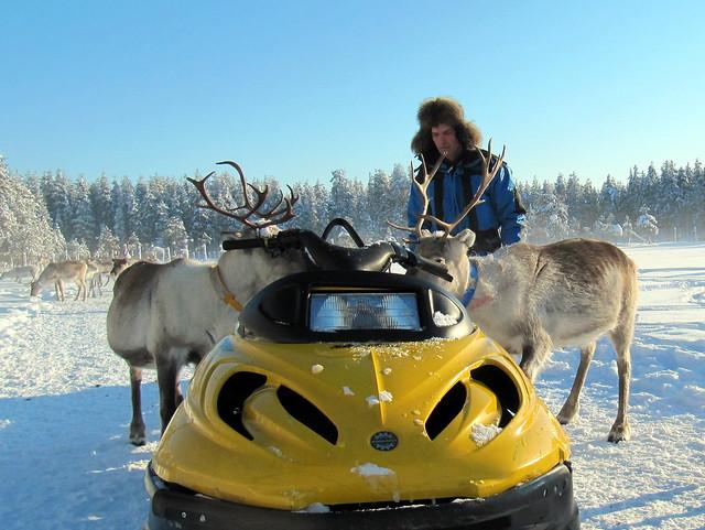 reindeer man feeding the reindeer in Lapland