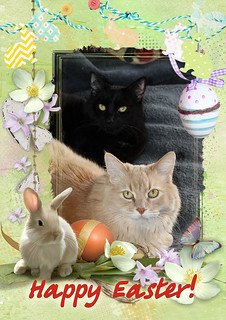 Happy Easter From Champaz And Blacky 20/4/2014....