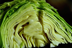 Green Cabbage 3