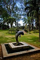 Dolphin Statue at Josone Park