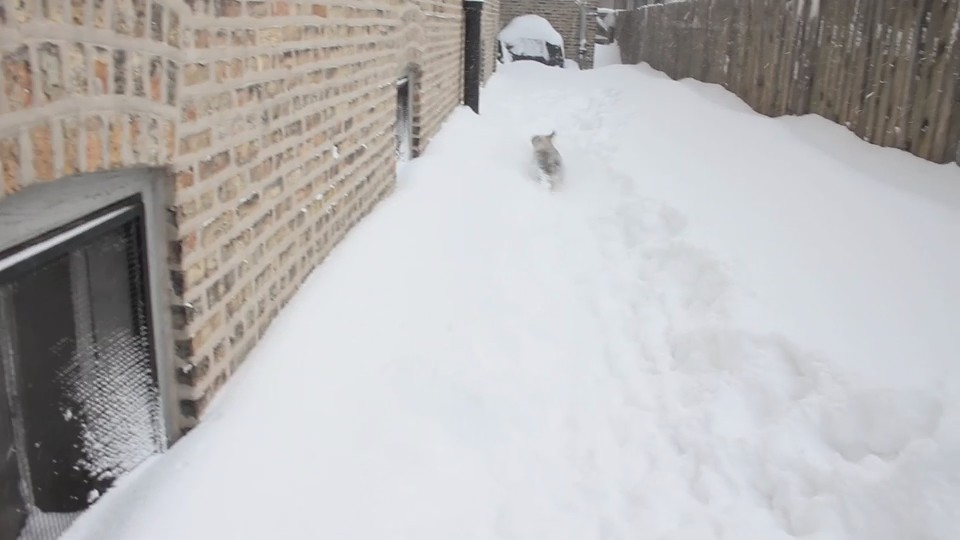 blizzard fetch 3