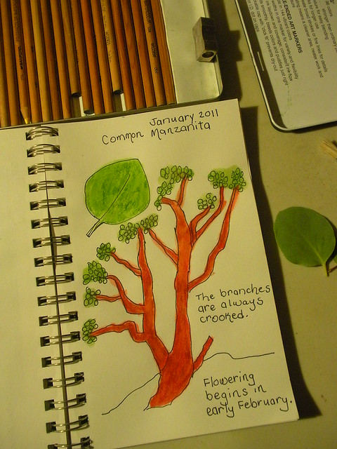 Manzanita nature journal (1)