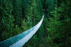 Capilano Suspension Bridge by michellerlee