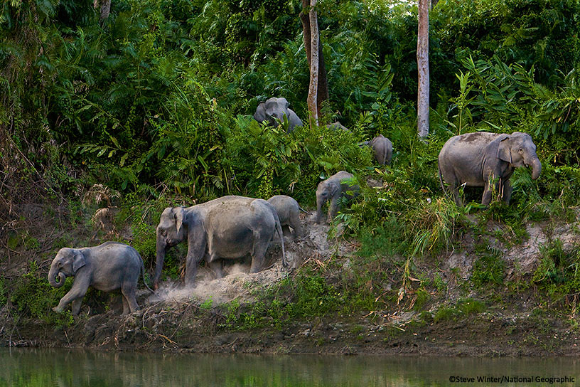 Group of elephants emerging from the forest