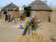thatching, village, straw, sand, hut, cob, rural area,