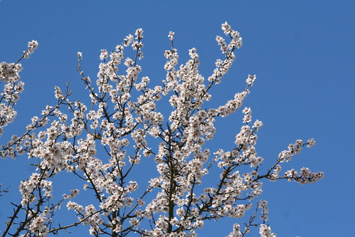 Blossoms and Blue Sky