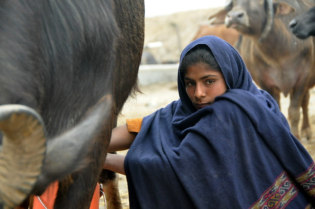 Dairy farmer girl in Punjab, India