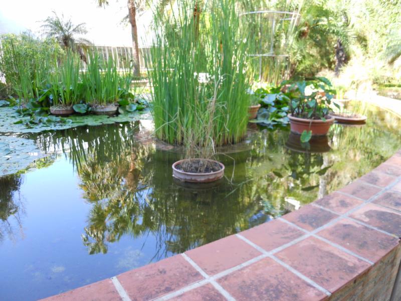 Jardín acuático del Botánico de Valencia