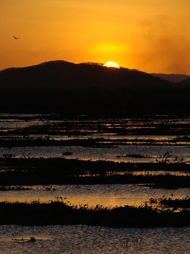 sunset sun costarica marsh paloverde wetland guanacaste paloverdenationalpark parquenacionalpaloverde