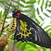 Thattekad Bird Sanctuary, Kerala image