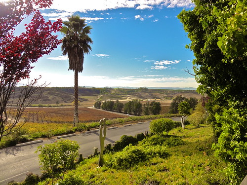 california christmas ca party wine sony winery valley tasting faulkner temecula 2010 dschx5v hx5v