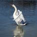 Cosmeston Lakes, Swan