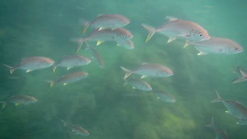 Koh Samui Snorkel & Fishing