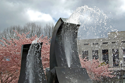 trees flower tree water fountain grass oregon cherry 5 capital blossoms april 桜 sakura salem fountains blooms viewing hanami 花見 d40 edmundgarman
