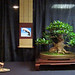 Ficus exotica display 2011 by OpenEye