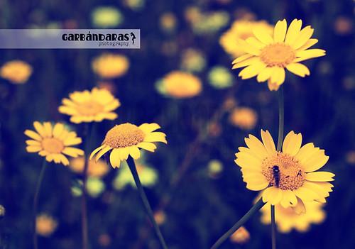 ...my yellow world... by Garbándaras
