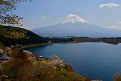 Lake Tanuki and Mount Fuji