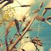 sunny days by rakelilla/robin