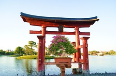 Epcot Bonsai Exhibition - Japan