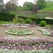 Tulip bedding display at Upton House