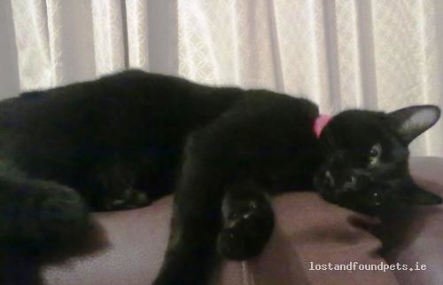 Fri, Apr 15th, 2011 Lost Male Cat - Ballyagran, Kilmallock, Limerick