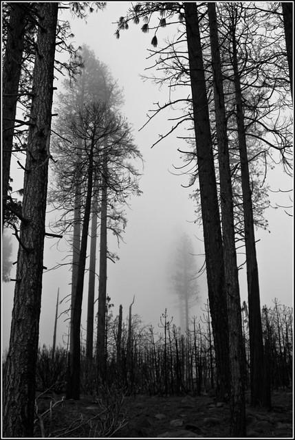trees, serious