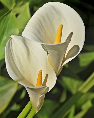 All Types Of Lilies: What Does Ecclesiastes Have To Do With Easter?