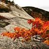 Fall is here! #:maple_leaf:#:fallen_leaf: