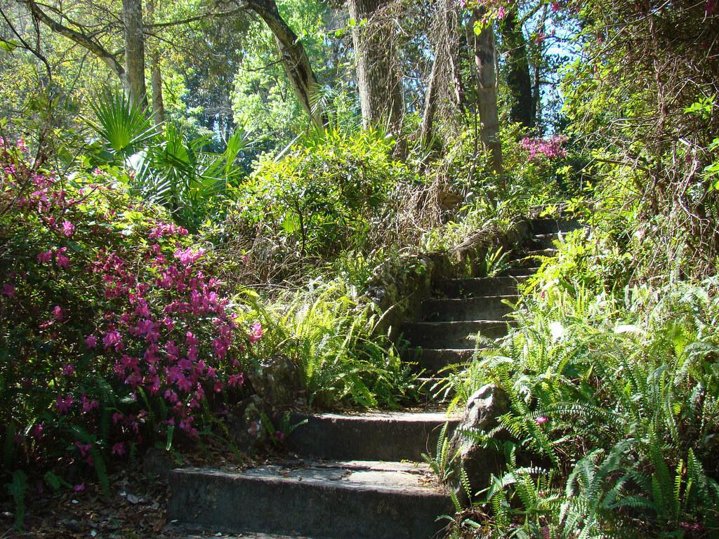 Ravine Gardens State Park Florida Tripcarta