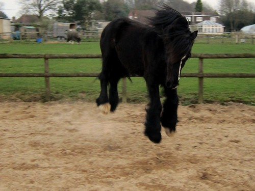 Zorro flinging himself into the air