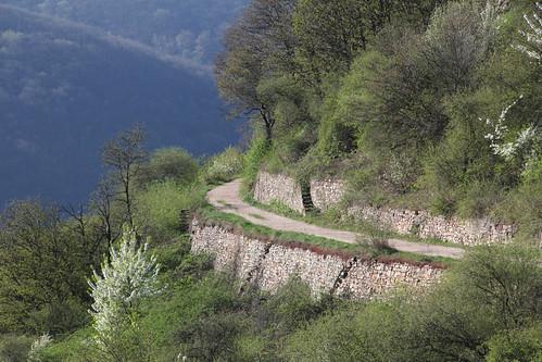 """""""Zwischen Wald und Strom"""" by annjoch"""