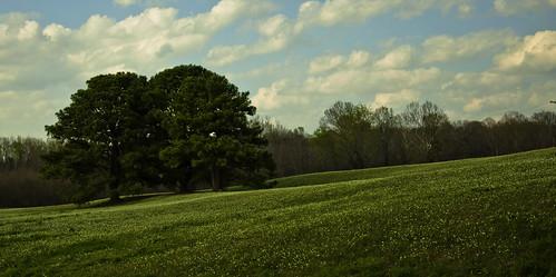 trees nikon hill
