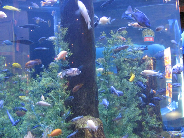 Houston Downtown Aquarium Flickr Photo Sharing