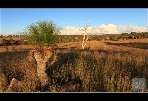 sunset clouds canon shadows country australia queensland warwick goldenhour grasstree darlingdowns 5dmkii canontse17mmf4l