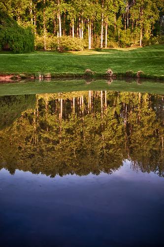 morning trees reflection water sunrise mirror pond maryland cpc hdr brooksidegardens brookside