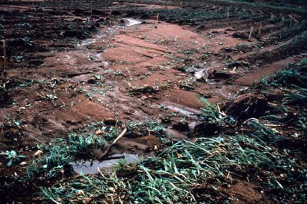 Maize field damaged by erosion