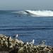 Surf & Mouettes © Office de Tourisme de Guéthary
