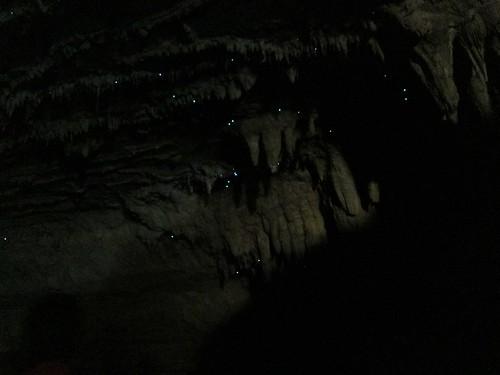 Glow worms!