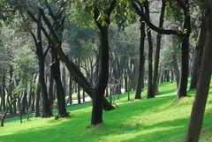 Yıldız Parkı - Yildiz Park