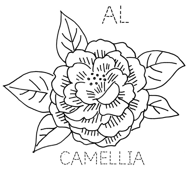 Camellia Flower Line Drawing : Alabama camellia flickr photo sharing