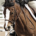 Small photo of Flying Forelock