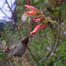 Anna's Hummingbird by Room With A View